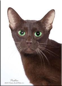 DMHeadcatsMandarinofSoesthi