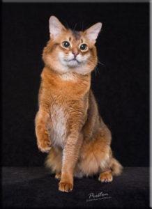 foxtrotsphotondm